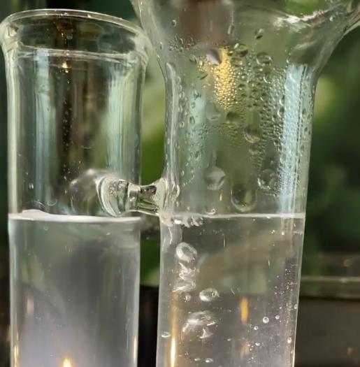 海茴香蒸餾,蒸餾萃取